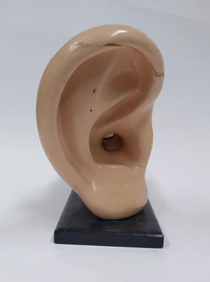 Anatomical model of a human ear