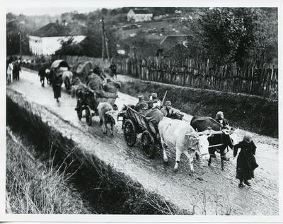 Black and white photograph of bullock carts carrying [Turkish] soliders during the First World War
