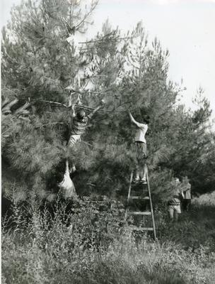 Black and white photograph of the Greece Junior Red Cross