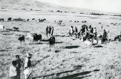 Black and white photograph of drought in Ethiopia 1973