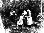 Chelsea Division administering first aid to hop pickers in Kent